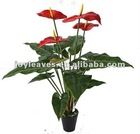 wedding flowers ,wedding plants,Christmas flower plant