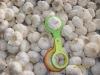 2012 chinese fresh garlic 5.0-6.0cm