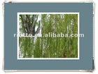 Hot sell natural White Willow Bark P.E.(Extract)