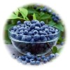 natural tonic of Bilberry extract