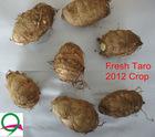 2012 new fresh shandong taro