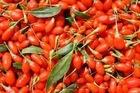 huici fresh goji berry