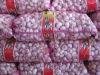 Fresh Normal White Garlic Pure White Garlic