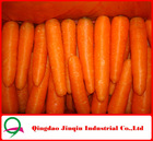 "JQ ""Carrot Price"" Chinese Carrot 2012 new crop Fresh"