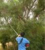 LSC330 long reach chain saw