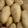 fresh potato from China 2012