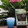 balcony plant super abosorbent polymer Fragreen Gardening SAP