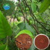 Pure Natural Pygeum Bark Extract /Phytosterol