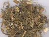 Artemisia apiacea/Sweet Wormwood Herb