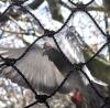 bird net.anti-bird net. agriculture bird net