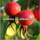 100% pure and nature rosehip oil manufacturer