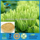 5:1 Honeysuckle Extract Chlorogenic Acid