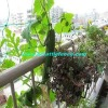 (plant supporting net) Cucumbet Netting