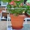 LM Rome plastic terracotta pots wholesale