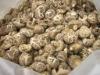 Organic Lentinulla Edodes (Shiitake) mushroom