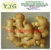 high quality ginger(clean/no insect pests/no rotten/no pesticide residue)