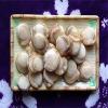 frozen boiled sea scallops meat ( roe off)