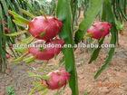 Taiwan fresh red dragon fruit