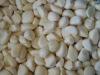 Frozen Garlic