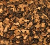 AD air dried black fungus