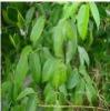 bio pesticide 5% rotenone