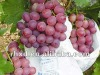 Sweet Red grape 2012 new crop