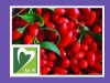 100% Natural Wolfberry Extract for Anti-fatigue and postpone senility