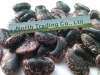 Large Black Speckled kidney bean 2011 crop, Yunnan origin, Hps)