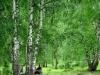 Birch Bark Extract Betulin(CAS:473-98-3) 90%