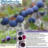 Bilberry Extract/25% Anthocyanins