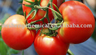 High quality Tomato Extract,CAS:13739-02-1