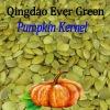 new crop chinese shine skin pumpkin seeds kernels