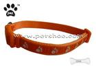 dog collars C006