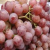 China red globe seedless grapes