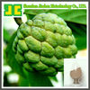 100% Natural botanical extracts Sweetsop Extract powder