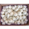 best price good quality garlic all kinds packing
