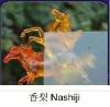 nashiji-figured glass