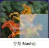 nashiji-figured glass