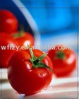 Aseptic packing tomato paste