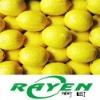 Chinese Eureka Lemon