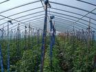 single span vegetable greenhouse