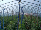 single span vegetable greenhouse