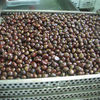 2012 Chinese Yanshan Grade AL Fresh Raw Chestnuts Wholesale