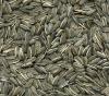 Sunflower Seeds-6009