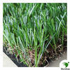 decoratived turf for landscape field