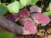 Natural plant extract Natural Food Color Purple Sweet Potato Color Anthocyanin