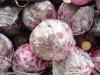 Red cabbage 2011 crop