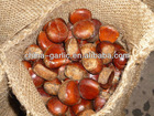 Fresh Chestnut for Jordan Market 5kg/gunny bag