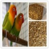 High protein bird feed mirowave dried mealworm in bulk