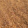 5 KG Vacuum Pack Dried Silkworm Chrysalis